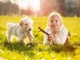 夏季必备 狗狗中暑症状以及抢救方法-佳雯宠物医院