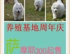 出售中型犬/萨摩/边境松狮/斗牛/哈士奇//秋田/等名贵幼犬