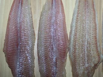 鲶鱼鱼片 埃及塘虱鱼片 胡子鲶鱼片 厂家直销 随时参观