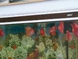 水族箱和鹦鹉鱼整体出售