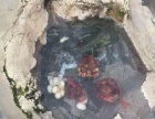 徽州文化园国际旅行社