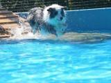 宠爱到家专业酒店式宠物寄养 支持24时看狗