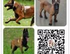 赤峰全国发货视频看狗纯种优质保健康