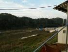 肇庆市高要区110亩鱼塘养殖基地转让