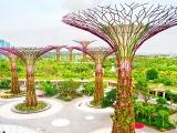 武汉垂直绿化植物有哪些武汉植物墙