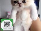 楚雄哪里有宠物猫出售,楚雄哪里有卖纯种加菲猫价格