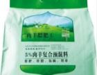 冬季杜泊绵羊的饲养管理