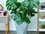 苏州绿植花卉盆景养殖基地销售-办公室租赁公司租摆免费设计景观
