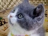 豹猫价格表 店铺搜:双飞猫