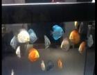 出售1米2屏风鱼缸,带灯一套。