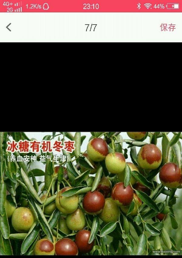 陕西大荔冬枣销售