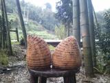 供应各种规格楠竹竹兜 竹根原材料