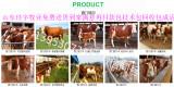 肉牛犊批发价格2018年的肉牛犊价格表威海肉牛犊