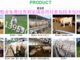 肉牛犊 甘肃改良肉牛犊价格求购小黄肉牛犊