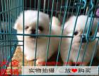 舟山最长情的相伴 京巴犬您的爱犬 给它一个温暖的家