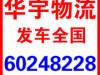 中山出售纯种斑点狗