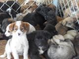 养殖业什么最赚钱肉狗狗多少钱一只