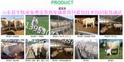 买小肉牛犊技巧2018年肉牛犊价格表中国养殖网求购肉牛犊