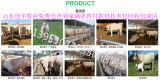 小牛犊小肉牛夏洛莱牛2018年肉牛犊价格表吉林肉牛犊什么价钱