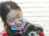 沃德沈阳宠物美容培训10人精品班一对一指导宠物美容培训