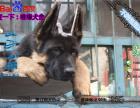 纯种健康的德国牧羊犬黑背多少钱一只在哪能买到