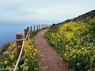 把节奏放慢,和家人一起来济州感受济州岛的春日吧!