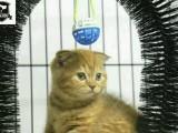 波斯猫满三个月 出售啦 疫苗做过 安心带回去养吧~