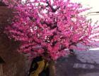 北京哪里有卖仿真桃花树许愿树仿真树租赁