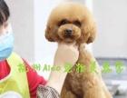 杭州爱可宠物美容培训学校,最新日韩技术零距离!
