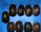 出售 黄缘龟 苏卡达 南石龟 猪鼻龟 鹰嘴龟 品相好