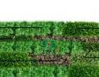 闵行龙柏金汇 仿真花、绿植墙、屋顶绿化公司