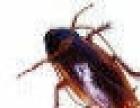 专业灭蟑螂 蚂蚁 老鼠讨厌它就找我吧