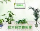 FLOWERMISS花心思,西安办公室绿化,鲜花订阅