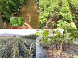 金華蘭溪市果苗供應服務