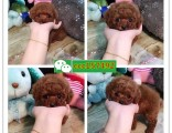 湘潭哪里有卖狗的 湘潭宠物狗出售