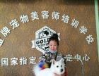 金牌宠物美容师培训学校,沈阳招生