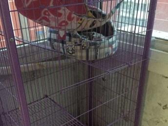 9成新貓籠 寵物籠,送貓窩 貓砂盆