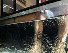 鱼缸清洗维修维护鱼缸鱼池造景设计鱼缸水草种植