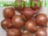 常年代收各种农副产品 吉林 农安大蒜辣椒