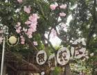 南宁亲子活动 银湖山庄农家乐采摘咖啡烧烤窑鸡