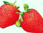投资小回报大的品牌水果店之果缤纷