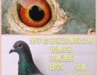 北京杨士杰中国杯,山东樊字启送惠翔预赛8名