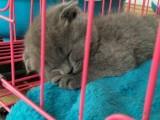蓝猫蓝白宝宝找新家