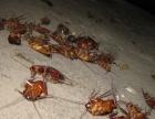 南昌好之帮杀虫公司、灭老鼠、灭白蚁、灭蟑螂、灭蚊蝇