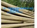 供应河北唐山防腐木.板材.木方.木模板.高压电线防护沙松杆