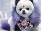 广州宠物美容培训学校 派多格