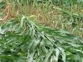 批发花卉种子草坪种子 牧草种子
