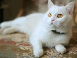 威海出售各品种幼猫 成猫 出售