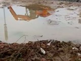 辽源东丰哪里有湿地挖机出租