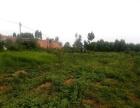 麻章坡塘村 厂房 平米